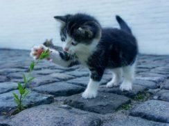 cat, flower, kitten